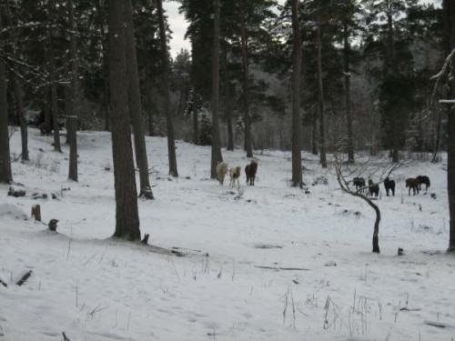090208hallgrim-skog