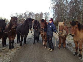 Elise och hästarna