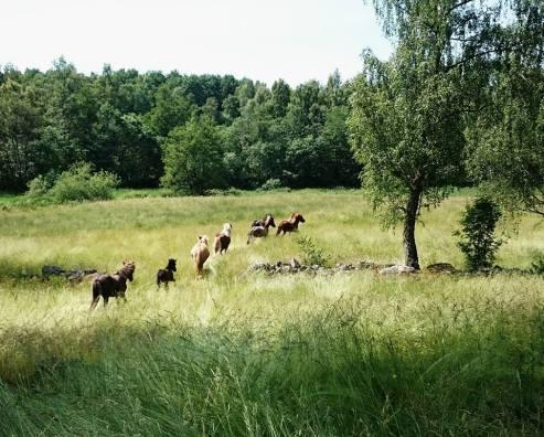 sommarhästar